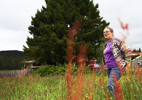 Eneste seterbudeie på Kvamsfjellet siden 1991, Anne Ragnhhild Korsvold Saglien, slutter etter sommeren. Nå skal yngre krefter få overta. Men det er med blandede følelser hun gir seg. Utviklingen på Kvamsfjellet er ikke bra for landbruket, mener hun.