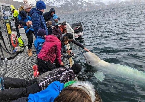 POPULÆR: Folk har strømmet til Hammerfest havn den siste uka for å se hvithvalen.