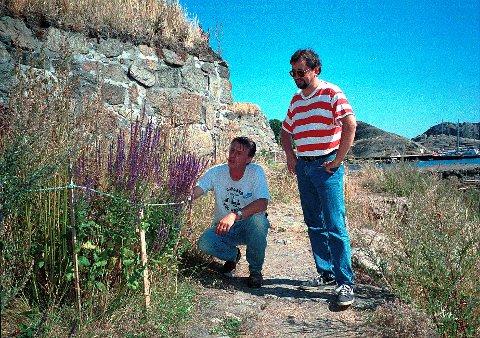 BOTANISERING  Stavernsøya med Citadelløya er en av de høyest prioriterte lokaliteter i LARVIK vurdert ut fra botanisk synspunkt. Her studerer medlemmer av Larvik Botaniske Forening (Trond Grostad t.v. og Tor Melseth) en forekomst av den sjeldne steppesalvie ved festningsmuren på Citadelløya. Foto: Nina Eriksen.