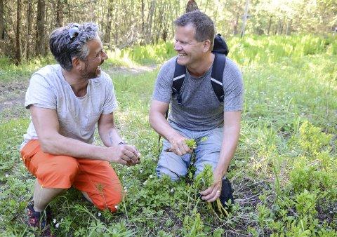 For å samle inn nok urter til julebrennevinet får Svein Jæger Hansen hjelp av gode venner. Her er han på plukketur sammen med Harald Adolfsen.