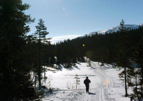 Det er fortsatt fine skiløyper på Vikerfjell siden det har kommet mye snø denne uka, men denne helgen kan være siste sjansen for en stund.