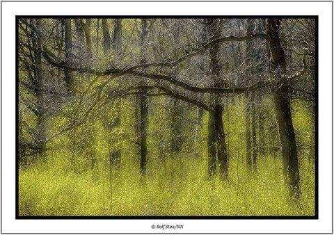 Rolf Støa er blitt en gjenganger i fotokonkurransen vår. Bildet av skogen er rett og slett vakkert.