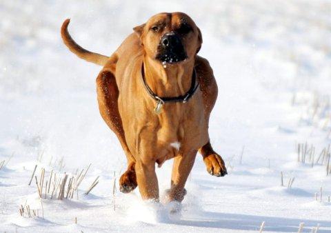 Sånn kan du ikke la hunden din løpe nå.