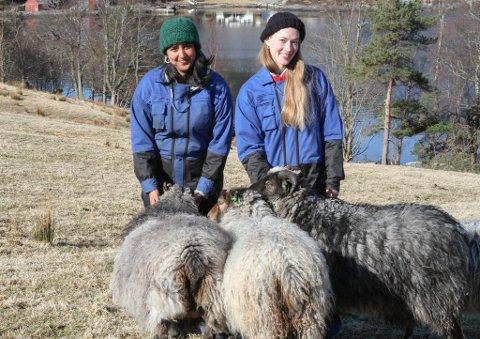 Siri Linn Brandsøy og Suneeta Gill flytta til Brandsøy og busette seg på farsgarden til SL. Derifrå driv dei produksjonsselskapet Farfars.