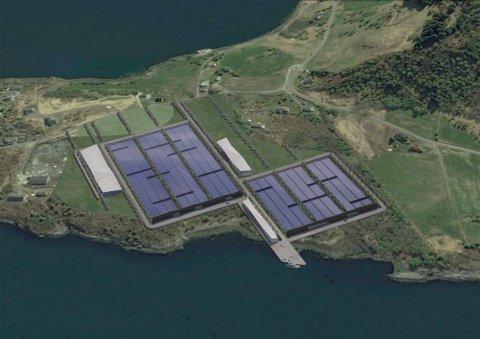 FEMDOBLING: Med 40.000 kvadratmeter oppdrettsanlegg på Orneset, vil Sogn Aqua femdoble arealet til kveiteproduksjon på land. Slik ser dei føre seg at anlegget kan bli.