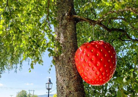 Sist utgave. Bildet var tatt på jordbærgården til Simen Myhrene i Sylling.