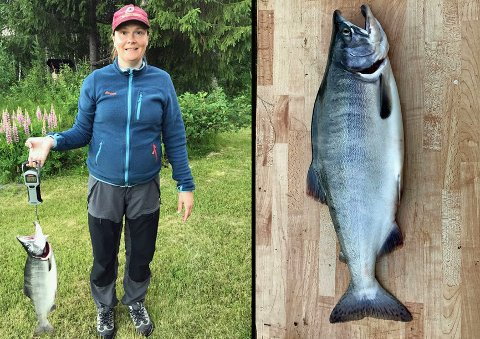 UØNSKET: Barbro Hagensen Melbye trakk opp pukkellaks på 2,5 kg. i Målselv. Det har kommet mange meldinger om den uønskede arten i norske elver denne sommeren. Foto: Privat