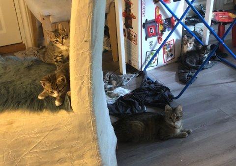 VARME OG TØRSTE: Her er seks av kattene som ble funnet i leiligheten et sted i Sandefjord på tirsdag. Kattungene var sterkt dehydrerte og kattemor var syk.