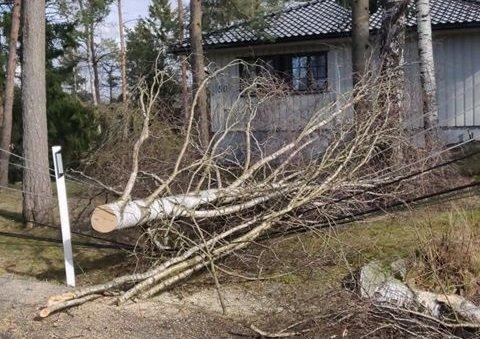 Bildet viser et tre som har falt over noen strømkabler i Mysen.