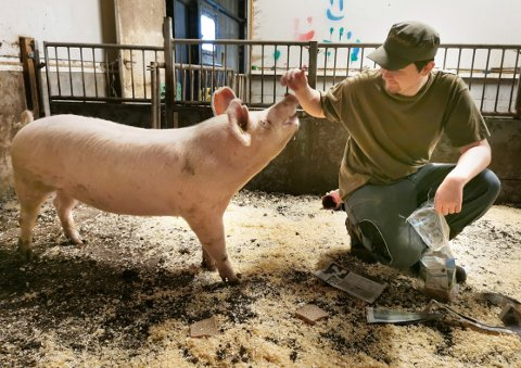 ÅRETS: TK-grisen og Matias Løseth foreviget under en fotoseanse der avisen Nationen og brød ble brukt som avledning for å få det rette bildet.