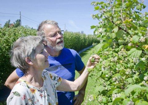 INVESTERER: Roy Andersen og Åse-Marit Thonjørnsrud har investert i å dyrke opp et nytt felt med bringebær og utvidelse av vinproduksjonen.
