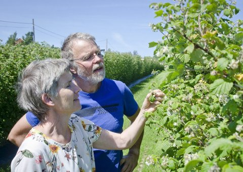 INVESTERER: Roy Andersen og Åse-Marit Thorbjørnsrud har investert i å dyrke opp et nytt felt med bringebær og utvidelse av vinproduksjonen. Foto: Åsmund A. Løvdal