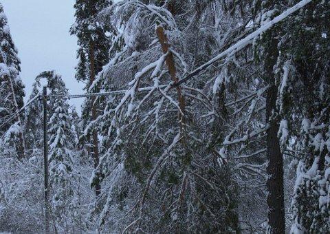 TREFALL: På årets første dag i 2019 falt flere trær over kraftlinjene og sørget for at flere tusen var uten strøm. Førstkommende lørdag kan det bli trøbbel på ny.