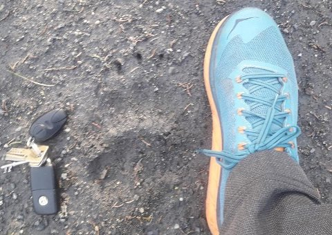 Odd Løvseth tok dette bildet på vegen der bjørnen passerte foran han tirsdag kveld.