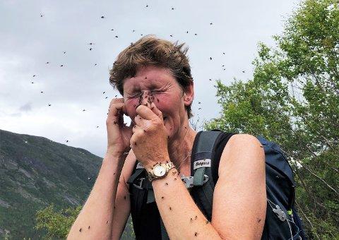 Inger Hastum fikk følge av en stor sverm med fluer på vei opp til fjelltoppen Modulhøi (2.044 moh.) på grensa mellom Lom og Skjåk.