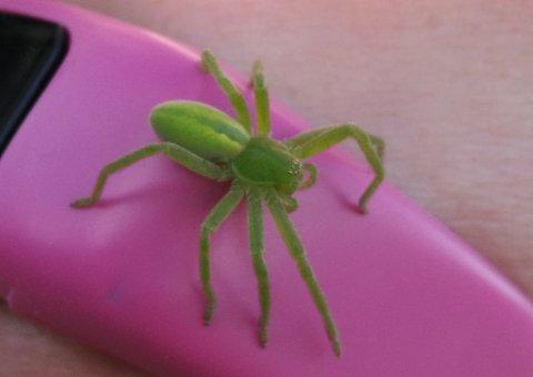 EDDERKOPP: Denne edderkoppen fant Solveig Rustad 20. oktober.