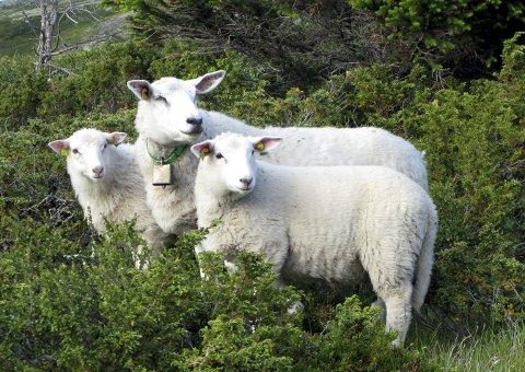 SALG: Salg av livdyr til privatpersoner er ulovlig. Foto: Scanpix