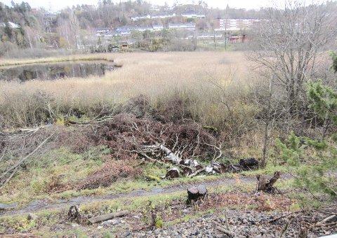 Nedhogde trær ved Kalstadtjenna.