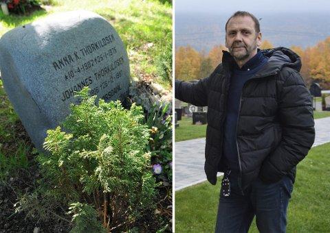 MÅLER IKKE: Kirkevergen i Kongsberg, Oddvar Etnestad, forteller at de er litt mer rundhåndet i praktiseringen av vedtektene, enn det en etterlatt i Tønsberg fikk erfare. Bildet til venstre viser plantene ved graven som vedkommende fikk påpakning for.