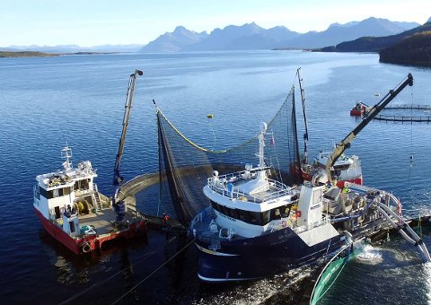 SKAL I RETTEN: Marine Supplys båt Polar Viking ute på oppdrag. Sjef Erik Mathisen tar nå en tidligere ansatt og flere andre personer til retten.