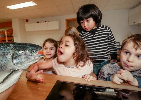 MENY: Læringsverkstedet Heimdalenga Barnehage hadde laks på menyen da de fikk besøk av en kokk fra Norsk Smaksskule. Fra venstre: Selma, Wilma, Eirik Nathaniel og Nathaniel.