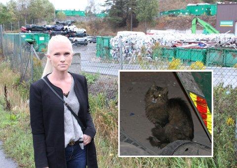 OPPDAGET MANGE KATTER: Anette Wilhelmsen og venninnen oppdaget en rekke katter så ut til å bo i avfallet hos Ragn-Sells i Moss. Blant annet denne katten med et skadet øye.