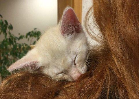 Her sover kattungen Simba på skulderen til en av betjentene ved Målselv lensmannskontor.