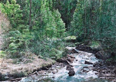 ROM II: Ivar P. Samuelsens serie «skogsfragmenter», skogmotiver hentet fra Norge.
