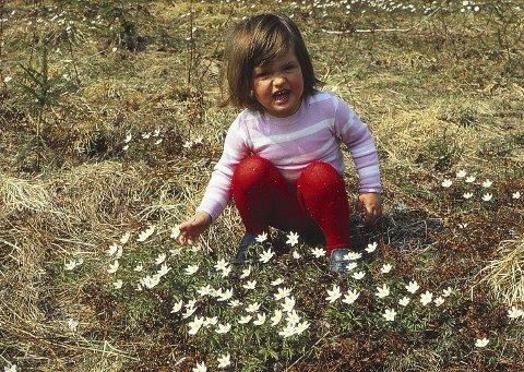 Blomster: Dette er den gode våren; barn i kvitveisenga.