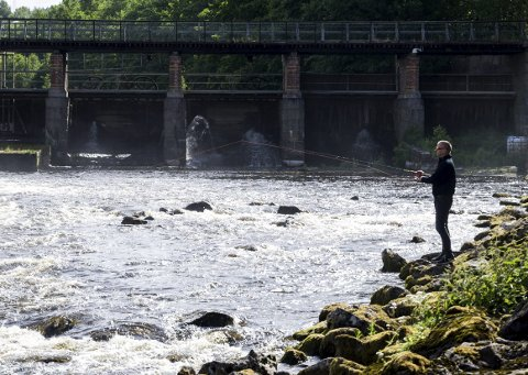 Laksefiske i Tista: Tirsdag kveld var det sesongstart for laksefiske i Tistaelva. Her står Terje Amundsen og koser seg langs Tista elva.Alle foto: Sara Helen Engmo