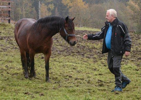 Nils Øystein Vallesether er en erfaren hestekar. Et tresifret antall hester er blitt oppdrettet på Vallesether østre opp igjennom årene.