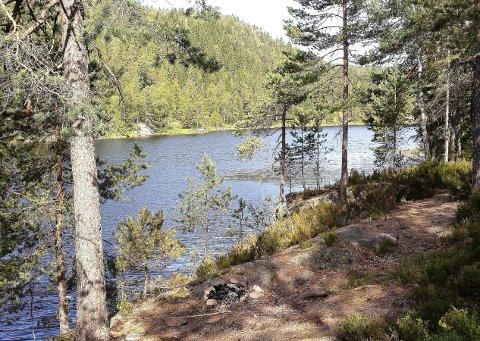 Ut på tur: Ute på odden ved Søndre Toresvann er det en fin plass for å sette seg ned med litt niste og kanskje ta et bad, skriver Øivind Fadum i Søndre SK.