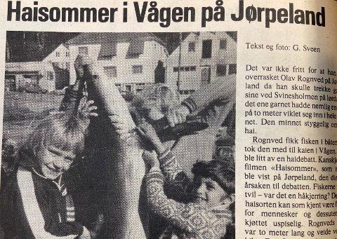 FAKSIMILE: Den store haien førte både til frykt og beundring i 1976, da Strandbuen skrev om haisommer på Jørpeland.
