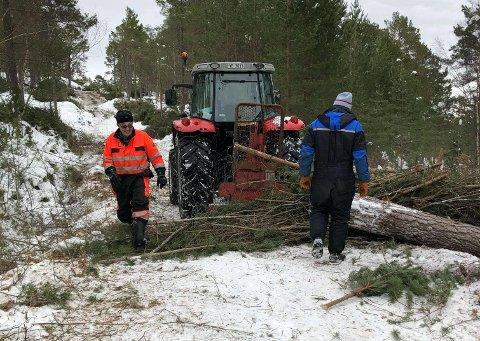 I fem helger har Ørnvika og Ånes Velforening vært ute og fjernet skog og kratt til en turløype på 1,5 kilometer Her er Peder Kleven (t.v.) og Jostein Kleven i aksjon.