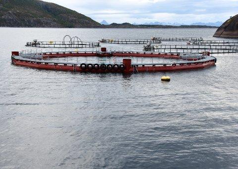 Uforandret: Det blir i alle fall ikke foreløpig ikke noen endring i den maksimale grensen for hvor mye laks Cermaq får produsere i Horsvågen ved Skutvik.