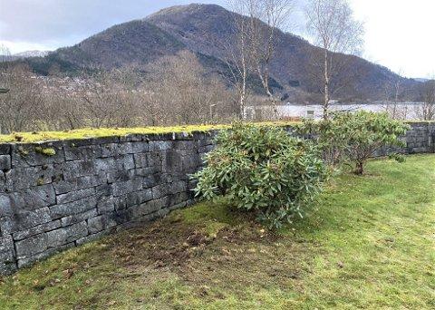 FANN KROPPSDEL: Mellom denne rhododendrobuska og muren på gravplassen på Blomreina i Førde fann politiet ein kroppsdel nedgraven tysdag 14. desember.