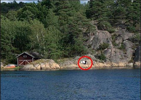 Her blir det PRIVAT-malt på fjellet på Nordre Sandøy.  Saken har skapt sterke reaksjoner, og  ordfører Mona Vauger har beordret at saken skal  prioriteres.