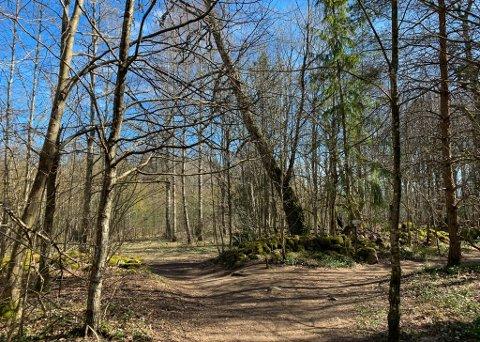VÅRVÆR: Husebyskogen er et av flere turmål som kan anbefales i helgen.