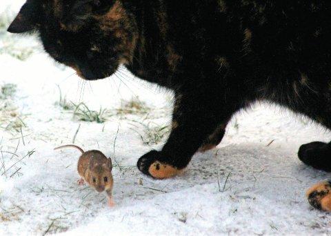 Nå er musene på farten igjen, og kattene klarer ikke å fange alle.