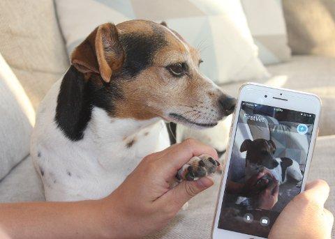 Mange dyreeiere kvier seg for å ta med dyret sitt til veterinæren. Nå har det blitt enklere takket være mulighet for videokonsultasjon med veterinær på mobilen, skriver If i en pressemelding. Dyrlegene i Gjerstad og Risør ønsker derimot ikke å ta imot denne løsningen enda. Men på sikt kan det bli en mulighet.