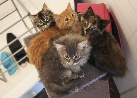 Trenger et hjem: Disse kattungene bor på badet hos Fredheim, men trenger et nytt fosterhjem.