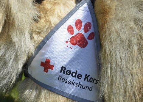 Trenger flere: I september starter et nytt kurs for dem som vil bli besøksvenner med hund. det skjer på Biri.
