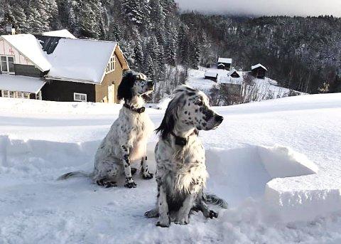 RØMLINGER: Vilma og Frøya forsvant fra småbruket i Kvamslidvegen i Gransherad fredag morgen. Familien savner hundene sårt.