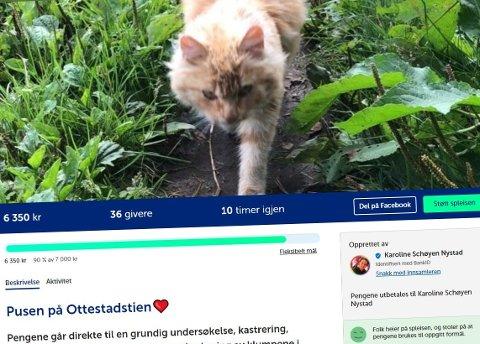 SPLEISELAG: På Spleis har engasjementet rundt «pusen på Ottestadstien» vært enorm. Over 6.000 kroner er kommet inn til katten.