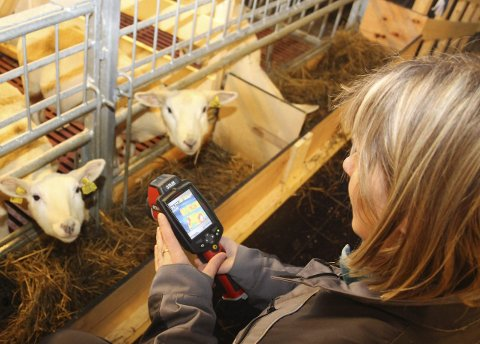 TAR TEMPEN: Forsker Grete Jørgensen ved NIBIO på Tjøtta tester temperaturen på sauene med et varmekamera. Foto: Jarl G. Sandholm