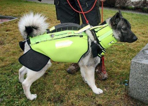 Mange søker om vest: En beskyttelsesvest for hunder, som koster litt over 4.000 kroner, er populært blant søkerne.