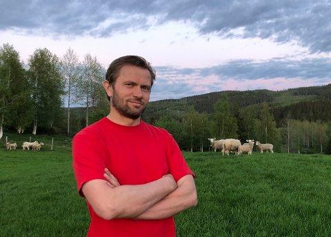 KVIER SEG: – Vet ikke om jeg vil slippe sauene mine til skogs akkurat nå , sier Steinar Lyshaug som har 650 sauer gående på innmarksbeite i Snertingdal.