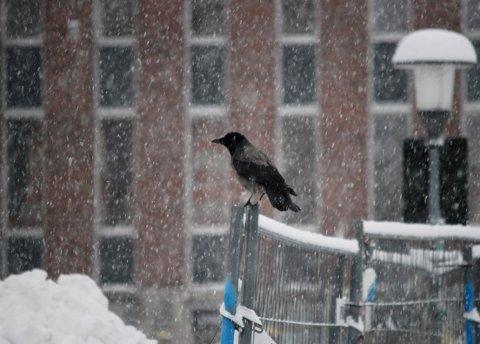SNØDRYSS: Meteorologene melder om nedbør i morgentimene.