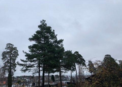 GRÅTT: Starten av uka blir grå og fuktig.