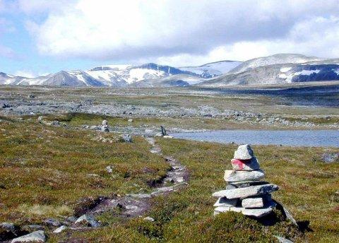 Det har vært forsket mye på villrein i fjellområdene, men lite på betydningen de har for folk. Arkivfoto